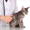 Ветеринарные клиники в Моздоке